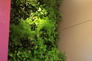 壁面に緑を!イメージ