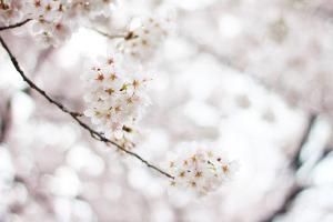 春一番イメージ