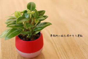 事務所に緑を増やそう運動_vol.02イメージ