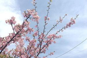 もうすぐ春はすぐそこ!イメージ
