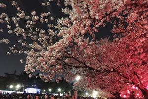 桜が咲くのも一瞬イメージ