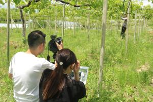ぐんぐん成長中のぶどう畑で撮影!_橘萄園プロジェクトイメージ