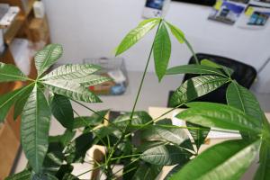 KOMの植物たち〜その後〜イメージ