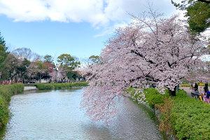 桜の開花予想だったので名城公園へイメージ