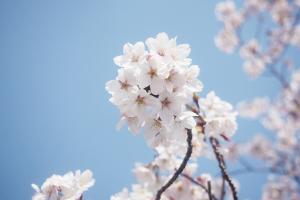 春の写真イメージ