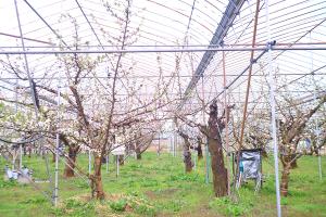 ブランディングと世界観_中川果樹園プロジェクトイメージ
