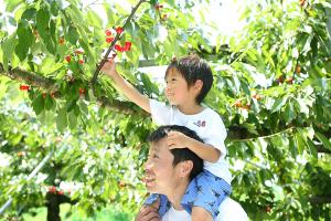 最高の写真が届きました!_中川果樹園プロジェクトイメージ