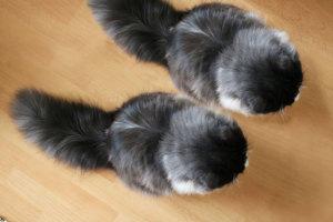 スタッフサワヤマ、2匹目を飼う。・・・?イメージ