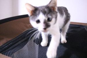 フレックス利用時の9割は猫がらみイメージ