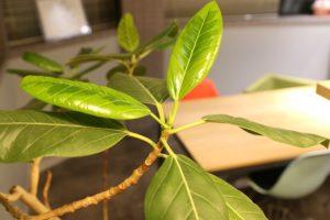 KOMの植物たち〜2020春〜イメージ