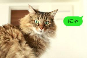 猫語でしゃべってます、にゃイメージ