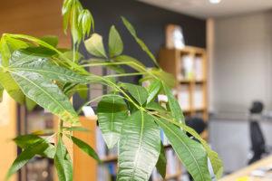 事務所の植物を愛でる日々イメージ