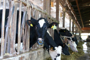 西尾の牧場にロケハンへ行ってきました!_Milksプロジェクトイメージ