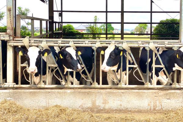 6次産業とブランディング〜本日は西尾で撮影でした_Milksプロジェクト