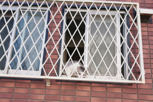 KOM周辺の最近会ったネコイメージ