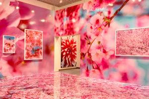 スタッフの休日 松坂屋名古屋で開催中の蜷川実花展に行ってきました!イメージ