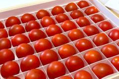 お取り寄せの勉強〜OSMICトマトが届きました!